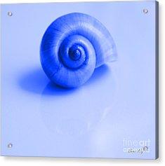 Blue Shell Acrylic Print