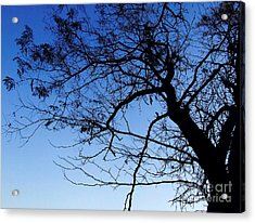 Acrylic Print featuring the photograph Blue Sky by Andrea Anderegg