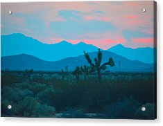 Blue Sky Cacti Sunset Acrylic Print by Deprise Brescia