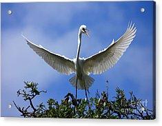 Blue Sky Landing Acrylic Print