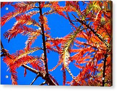 Blue Sky Sunday Acrylic Print by David  Norman