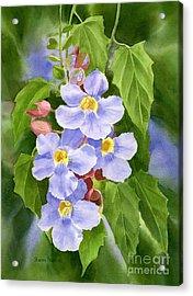 Blue Sky Vine With Background Acrylic Print by Sharon Freeman