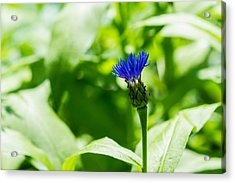 Blue Spot In The Green World - Featured 3 Acrylic Print by Alexander Senin