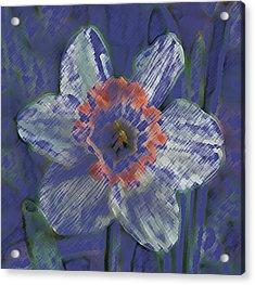 Blue Spring Flower Acrylic Print