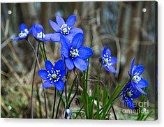 Blue Springtime Acrylic Print by Kennerth and Birgitta Kullman