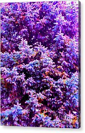 Blue Spruce In The Snow Acrylic Print by Ann Johndro-Collins