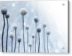 Blue Sunshine Acrylic Print by Lisa Knechtel