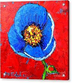 Blue Tibetan Poppy Acrylic Print by Ana Maria Edulescu