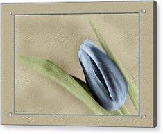 Blue Tulip Acrylic Print by Philip  Butler