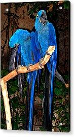 Blue Velvet Acrylic Print
