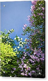 Blue Wall With Flowers Acrylic Print by Elena Elisseeva