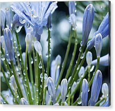 Acrylic Print featuring the photograph Blue Water Drops -3  by Haleh Mahbod