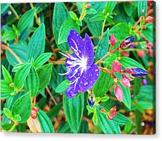 Blue With Dew Acrylic Print by Van Ness