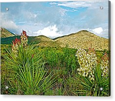 Blue Yucca And Chisos Mountains In Big Bend National Park-texas Acrylic Print by Ruth Hager