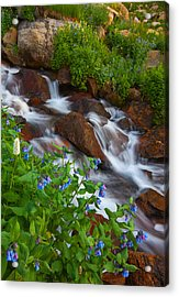 Bluebell Creek Acrylic Print by Darren  White