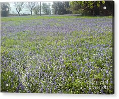 Bluebell Fields Acrylic Print