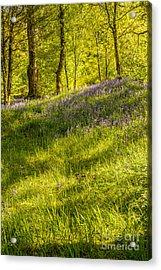 Bluebell Flowers Acrylic Print
