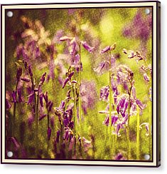 Bluebell In The Woods Acrylic Print