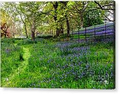 Bluebell Way Acrylic Print