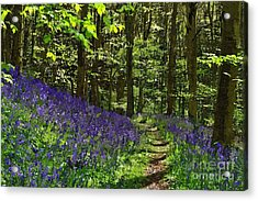 Bluebell Woods Photo Art Acrylic Print