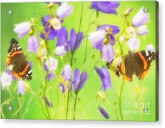 Bluebells And Butterflies Acrylic Print