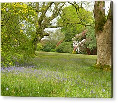 Bluebells And Rhododendrons Acrylic Print by Rob Sherwood