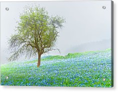 Bluebells Acrylic Print by Debra and Dave Vanderlaan