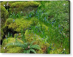 Acrylic Print featuring the photograph Bluebells  by Marilyn Wilson