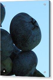 Blueberry Boulder Acrylic Print