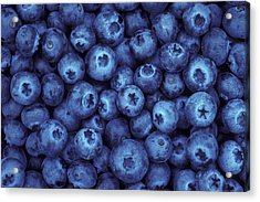 Blueberry Harvest Acrylic Print by Greg Vaughn