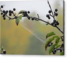 Acrylic Print featuring the photograph Blueberry Web by Nikki McInnes