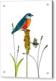 Bluebird And Bee Acrylic Print