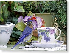 Bluebird And Tea Cups Acrylic Print