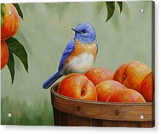 Bluebird And Peaches Greeting Card 3 Acrylic Print