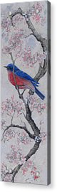Bluebird In Cherry Blossoms Acrylic Print by Sandy Clift