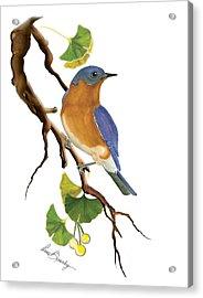 Bluebird In Ginkgo Tree Acrylic Print