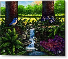 Bluebird Acrylic Print by Michael Frank