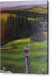 Bluebird On A Birdhouse Acrylic Print