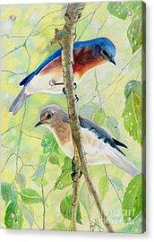 Bluebird Pair Acrylic Print by Marilyn Smith