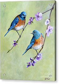 Bluebirds And Blossoms Acrylic Print