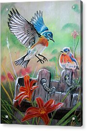 Bluebirds Bucket Acrylic Print
