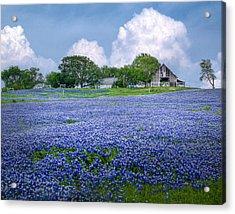 Bluebonnet Farm Acrylic Print