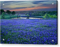 Acrylic Print featuring the photograph Bluebonnet Lake Vista Texas Sunset - Wildflowers Landscape Flowers Pond by Jon Holiday