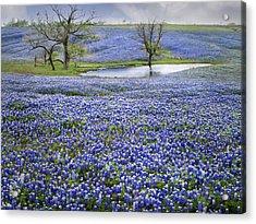 Bluebonnet Pond Acrylic Print