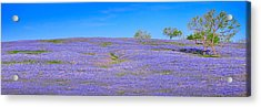 Acrylic Print featuring the photograph Bluebonnet Vista Texas  - Wildflowers Landscape Flowers  by Jon Holiday