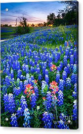 Bluebonnets Forever Acrylic Print by Inge Johnsson