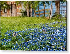 Bluebonnets Swaying Gently In The Wind - Brenham Texas Acrylic Print