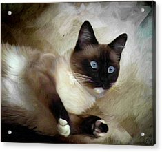 Blueeyed And Brownmasked Acrylic Print by Gun Legler