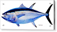 Bluefin Tuna Acrylic Print by Carey Chen