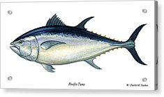 Bluefin Tuna Acrylic Print by Charles Harden